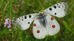 Aizkorri Aratz Mariposa Murcielagos
